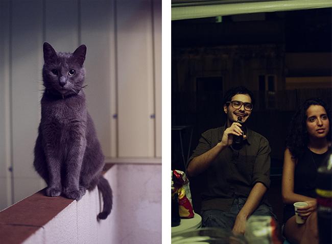 gato y gori
